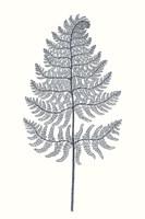 Framed Indigo Botany Study VIII