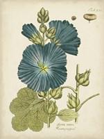Framed Eloquent Botanical IV