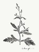 Framed Botanical Imprint III