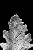 Framed Striking Leaf IV