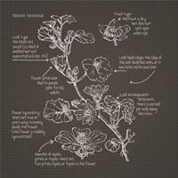 Framed Blackprint Florals II