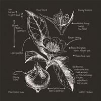 Framed Blackprint Florals I