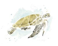 Framed Watercolor Sea Turtle Study I