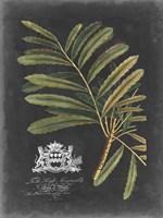 Framed Royal Foliage II