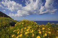 Framed Europe, Greece, Santorini Wildflowers And Ocean Landscape
