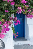 Framed Greece, Santorini A Picturesque Blue Door Is Surrounded By Pink Bougainvillea In Firostefani