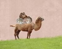 Framed Camel on Pink
