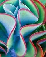 Framed Succulent VII