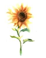 Framed Sunflower III
