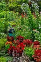 Framed Garden Summer Flowers And Coleus Plants In Bronze And Reds, Sammamish, Washington State