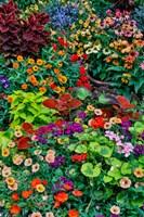 Framed Garden In Full Bloom, Sammamish, Washington State