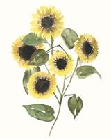 Framed Sunflower Composition II