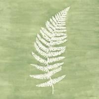 Framed Forest Ferns III