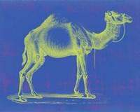 Framed Safari Pop III