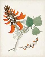 Framed Botanical of the Tropics I