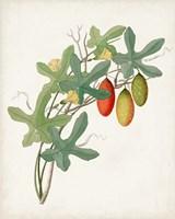 Framed Botanical of the Tropics III