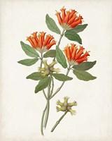 Framed Botanical of the Tropics V