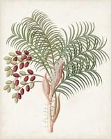 Framed Botanical of the Tropics VII