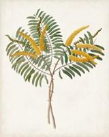 Framed Botanical of the Tropics VIII