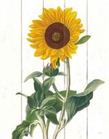 Framed Cottage Sunflower
