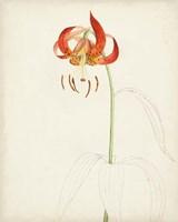 Framed Watercolor Botanical Sketches I