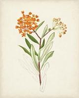 Framed Watercolor Botanical Sketches VI