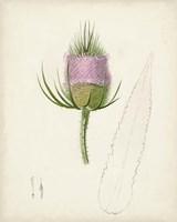 Framed Watercolor Botanical Sketches VIII