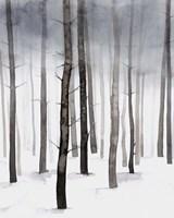 Framed Hazy Winter Walk II