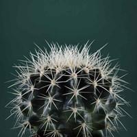 Framed Cacti II