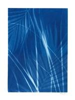Framed Cyanotype Tropical II