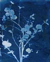 Framed Enchanted Cyanotype VI