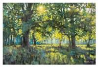 Framed Through Silent Trees