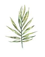 Framed Areca palm leaf