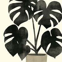 Framed Plantling II