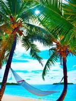 Framed Coconut Sun