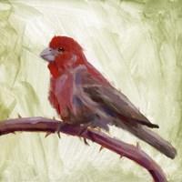 Framed Backyard Birds II