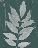 Framed Enchanted Fall Cyanotype IX