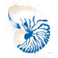 Framed Nautilus Sq