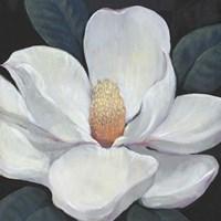Framed Blooming Magnolia I