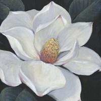 Framed Blooming Magnolia II