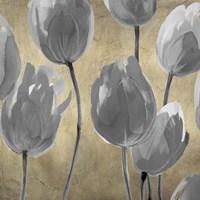 Framed Grey Tulips I