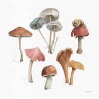 Framed Mushroom Medley 02