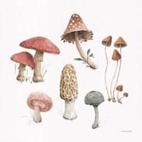 Framed Mushroom Medley 03