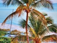 Framed Colors of Florida