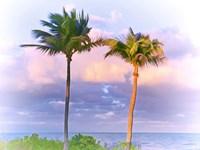 Framed Two Palms