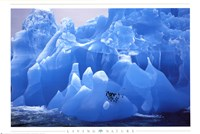 Framed Penguins on Blue Ice