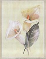 Framed Calla Lily IV