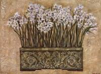 Framed White Narcissus