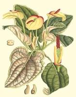 Framed Botanical Fantasy III