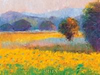 Framed Sunflowers in Provence